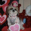 Puppy Prom dog
