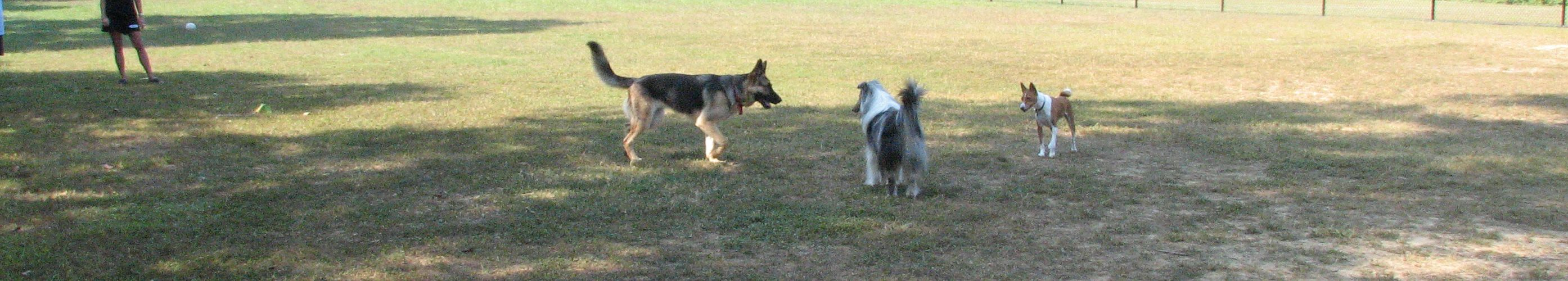 Blydenburgh Dog Park