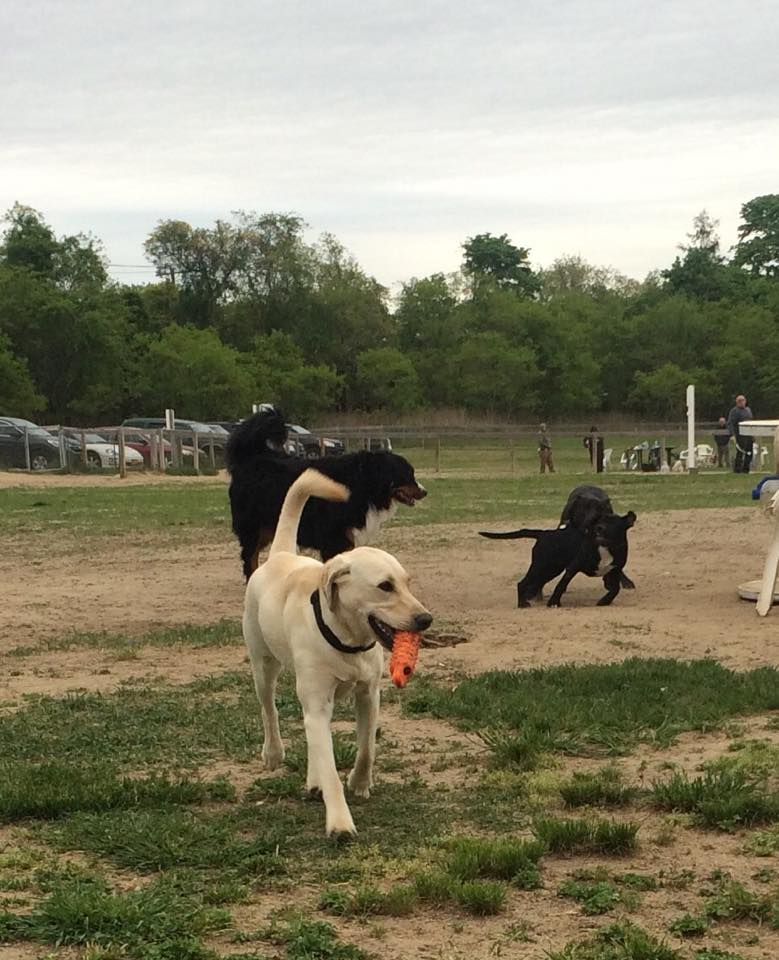 Suffolk Ny Dog Park