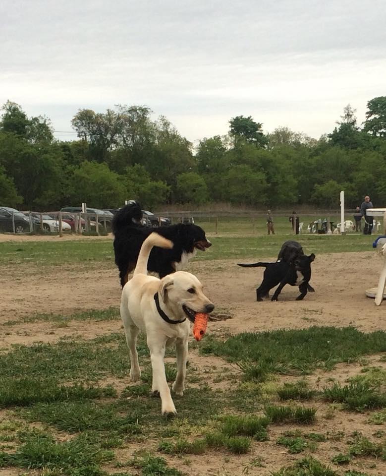 Dog Park Brookhaven