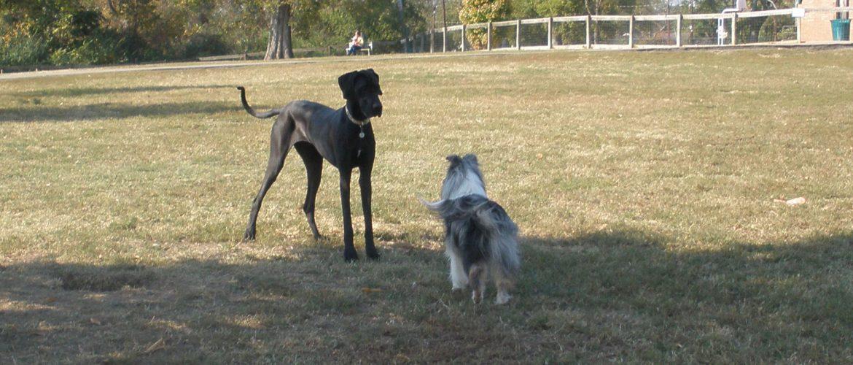 Shelby Dog Park