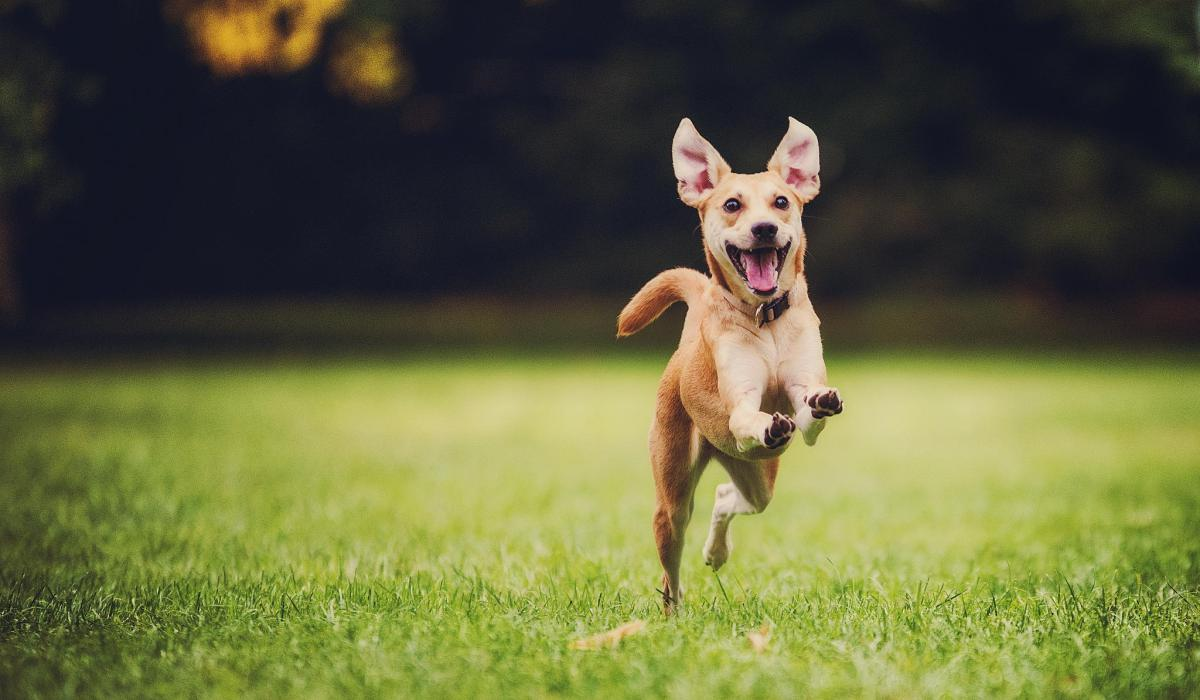 acting pictures of happy animals