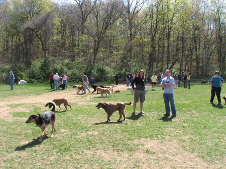 Suffolk County Parks Dog Friendly