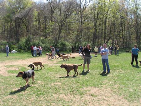Suffolk County Dog Parks Li Dog